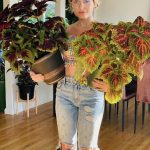Repotting Ninja Ignites our Love for Plant Care one Repotting at a Time